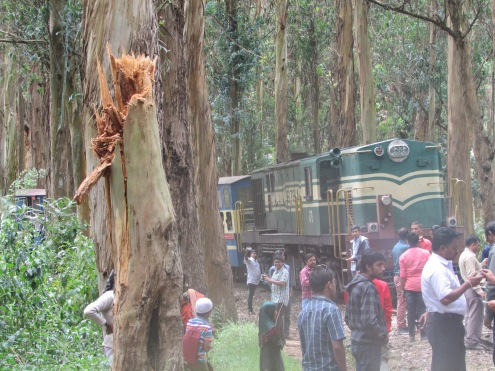 Aftermath of tree crash passengers help clear debris