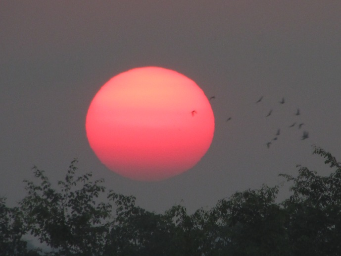 just missed the birds..... Chitwan in Nepal