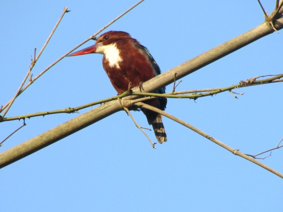 Love Kingfishers (birds and beer)