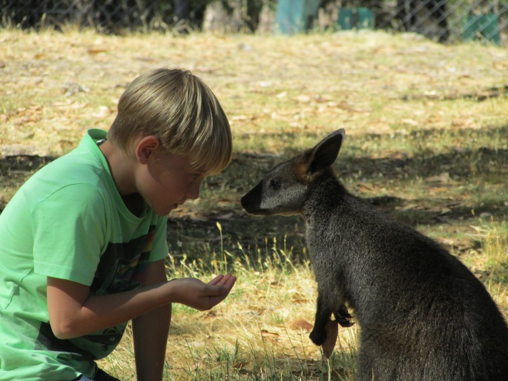 Talking to the 'roo