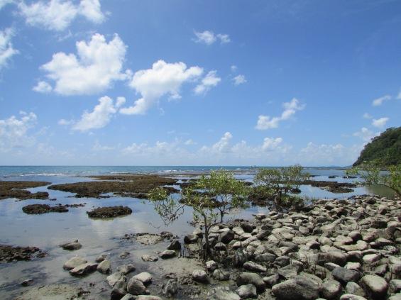 Rainforest on the Beach