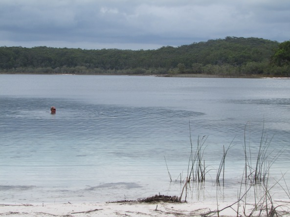 "MB taking a dip. Lake McKenzie is a perched lake (created by rain water only) sitting on top of compact sand and vegetable matter 330 ft above sea level. Lake McKenzie has an area of 150 hectares and is just 16 ft in depth. The beach sand of is nearly pure silica and enabled us to ""shine up"" our wedding rings as if they were knew. Water temperature 28C and air 31C - beautiful."