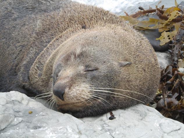 Sarah the seal