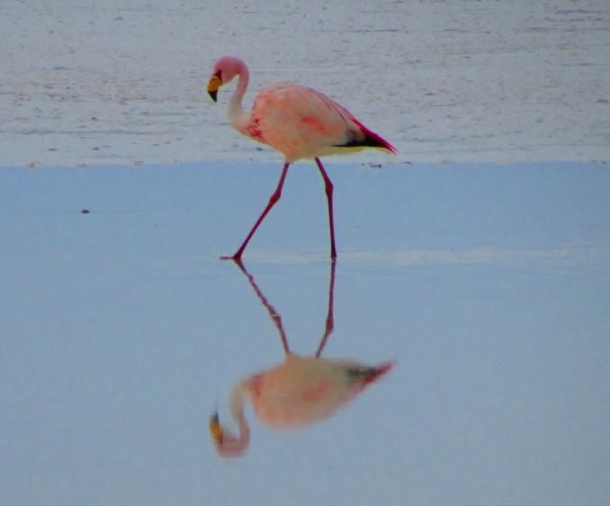 Flamingoland, North Yorkshire