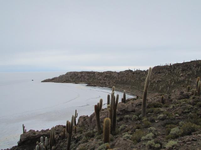 Island in the salt centre