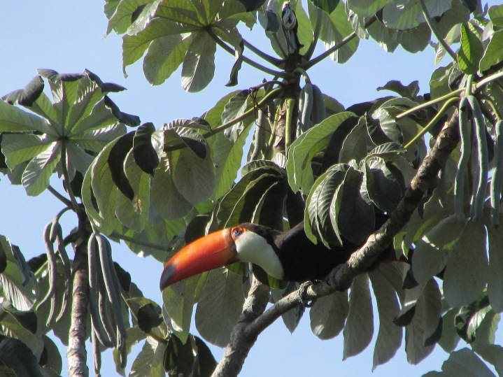 Toucan play at that game!